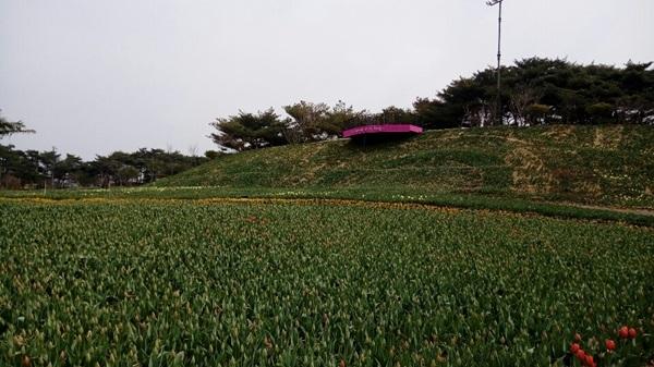 태안 튤립축제장 현재 모습.